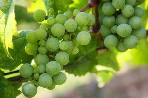vendre une propriété viticole, vignobles à vendre