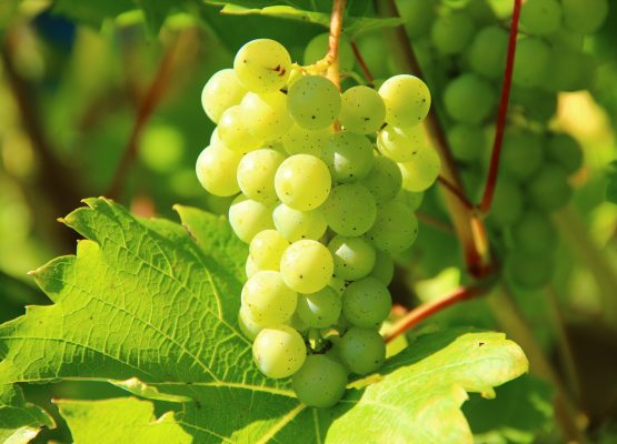 vendre un chateau viticole, vignes et vignobles à vendre en France