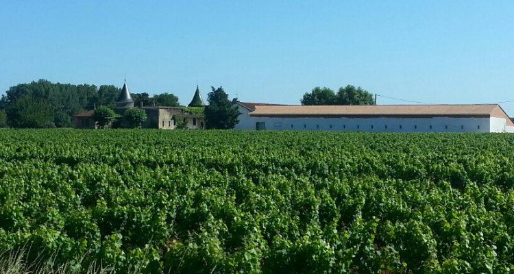 vente vignes Bordeaux