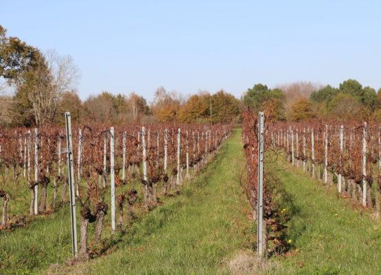 Propriété viticole en Bordeaux