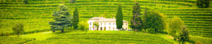 proprietes-viticoles-a-vendre-VIGNES-A-VENDRE
